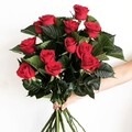 12 Premium Red Roses Long Stem